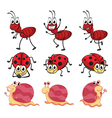 A snail a ladybug and an ant vector image vector image