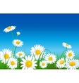 meadow with daisies vector image