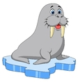 Cute walrus cartoon on ice vector image
