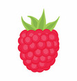 raspberry on the white background vector image