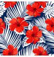 tropical flowers vector image