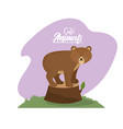 cute bear animal to natural wildlife vector image