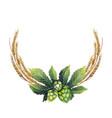 Watercolor hop and malt vector image