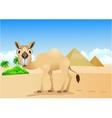 camel cartoon vector image vector image