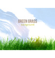fresh green grass and blue sky vector image