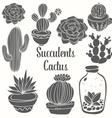 Succulent Cactus Set vector image