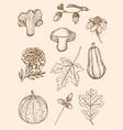autumn design kit vector image