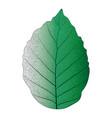 botanical series elegant single exotic leaf 2 vector image