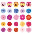 floral bloom set different summer flower vector image