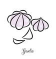 garlic hand drawn doodle icon vector image