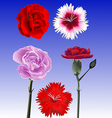 carnation collection vector image vector image