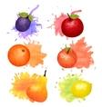 Fruit Watercolor Icon Set vector image