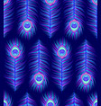 pattern with colorful peacock feathers vector image