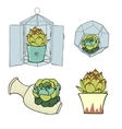 Set of four green succulents - inside vector image