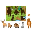 Forest cartoon animals with shadows vector image