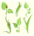 plant leaves vector image