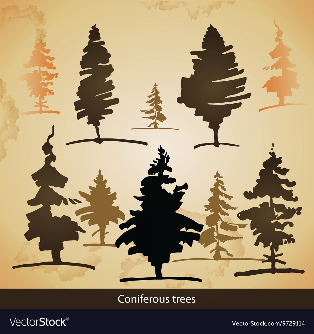 Coniferous trees vector