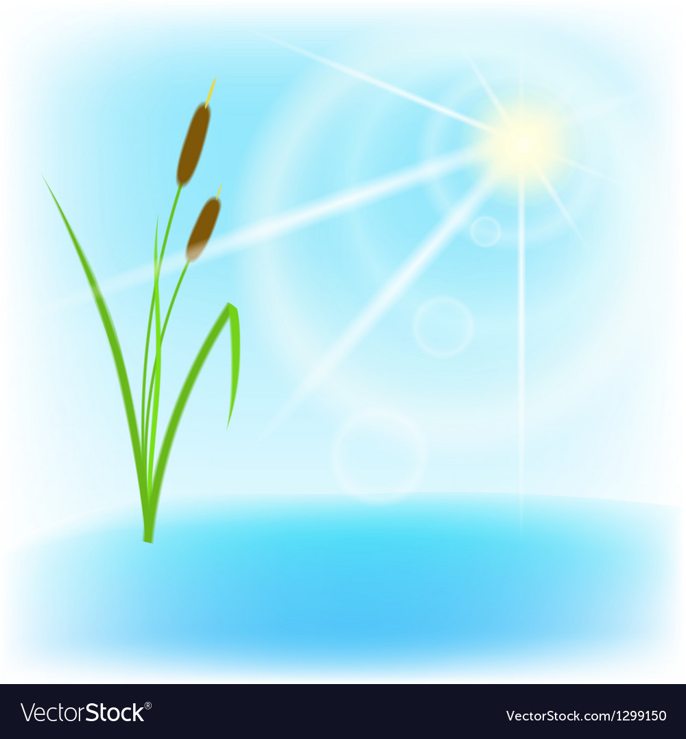 Cane lake and sun with lens flare eps10 vector