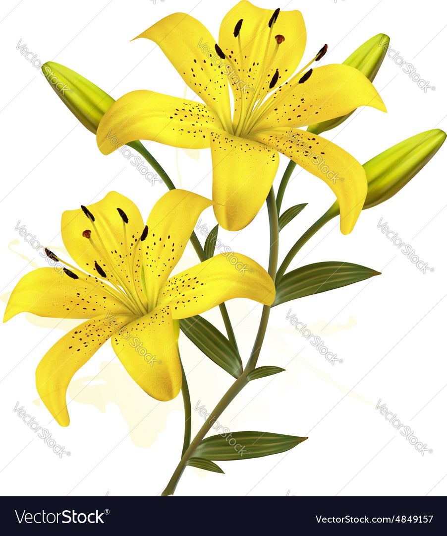 Flower background with yellow beautiful lilies vector