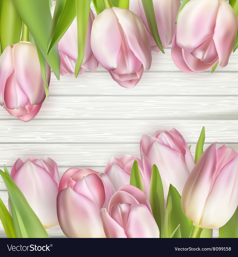 Beautiful pink tulips on wooden background eps 10 vector