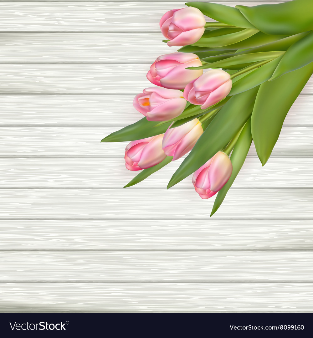Pink tulips over white wood eps 10 vector