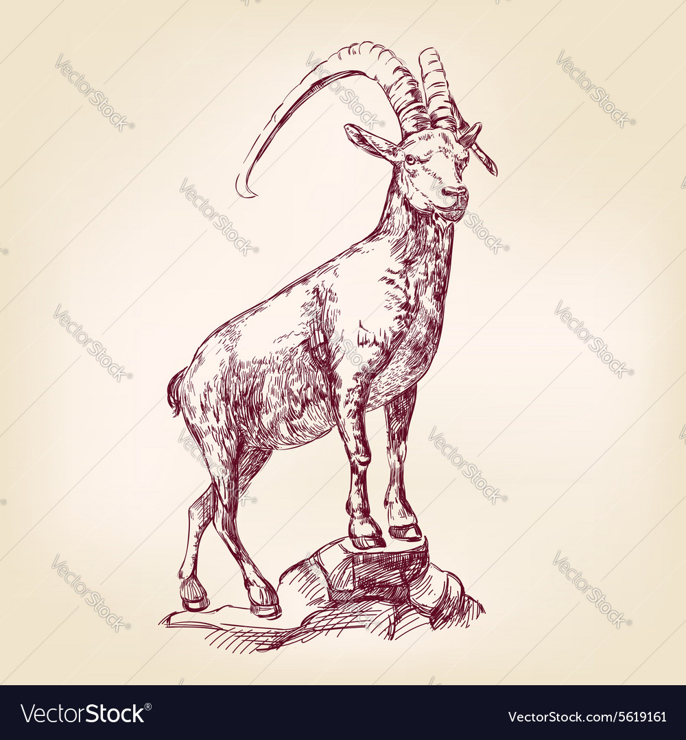 Goat hand drawn llustration vector