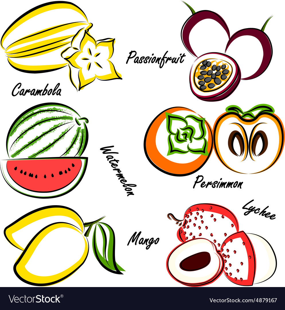 Thai fruit4 vector