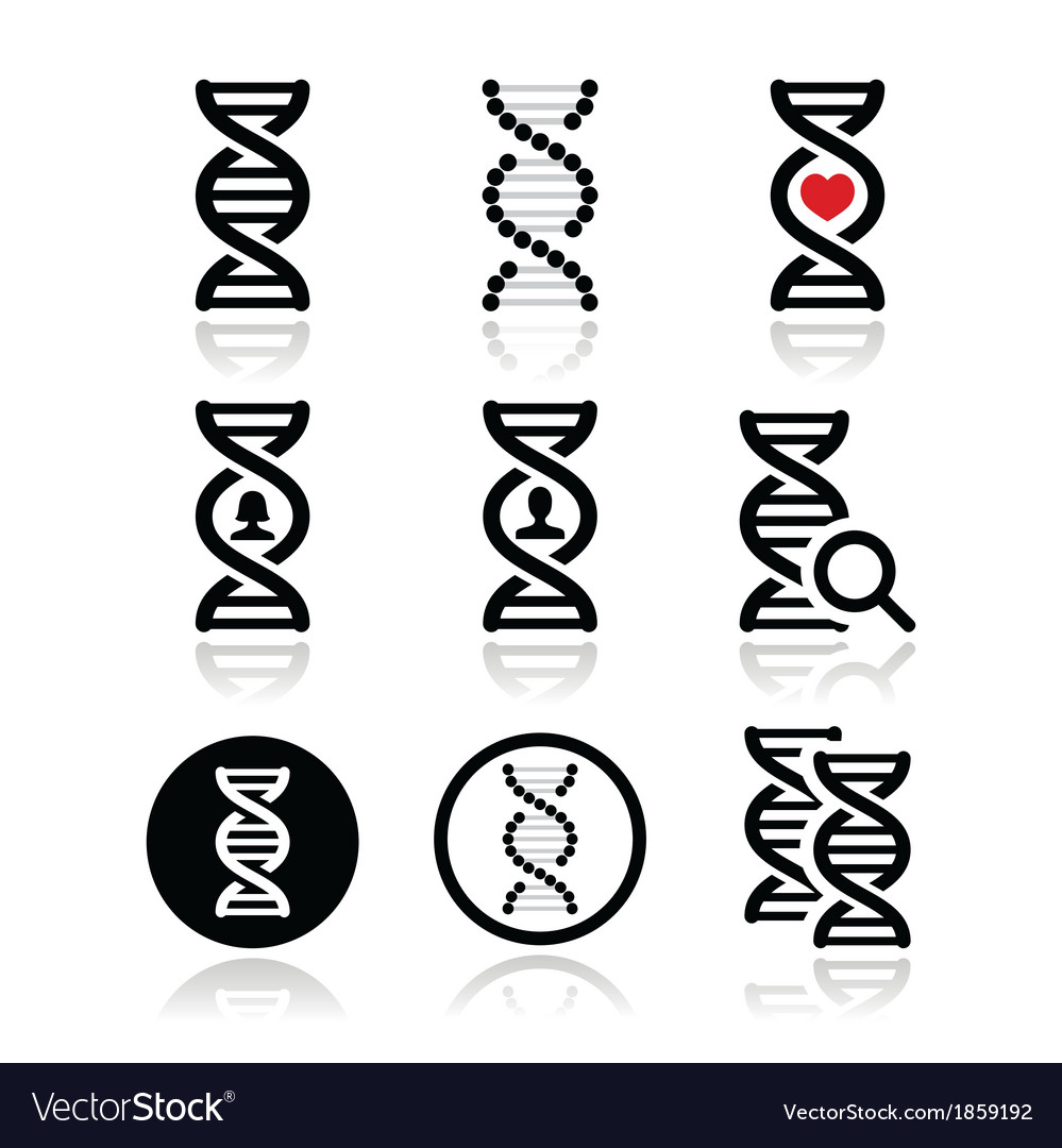 Dna genetics icons set vector