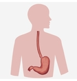 Stomach Image vector image
