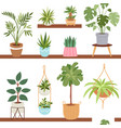 house indoor plants and nature homemade vector image