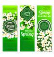 spring holiday floral banner for springtime design vector image