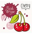 Cherry concept 001 vector image