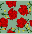 red carnation flower on green background vector image