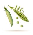 Watercolor handmade peas vector image