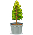 A plant in a pot vector image vector image
