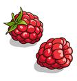 Raspberries 001 vector image vector image