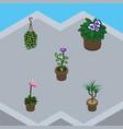 isometric plant set of flowerpot flower blossom vector image
