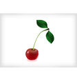 Cherry with leaves and waterdrops vector image