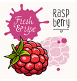 Raspberry concept 001 vector image vector image