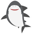 Great white shark on white background vector image