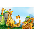 Many giraffes in the field vector image