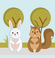 cute rabbit and squirrel wild animals forest vector image