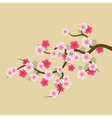 Sakura Flowers Background Cherry Blossom vector image