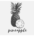 pineapple exotic fruit vector image