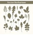 Herbarium vector image vector image