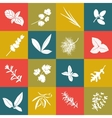 Herbs hand drawn big icon squared set vector image
