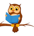 owl cartoon reading a book vector image