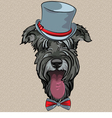 hipster dog Schnauzer vector image