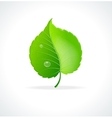 Glossy green detailed leaf vector image