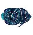 colored of emperor angelfish vector image